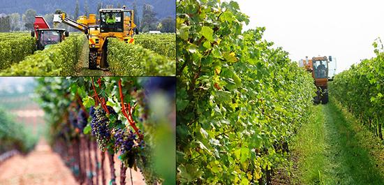 ghid-viticultura-emenatwork