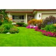 Amenajari Terase Si Gradini Arbori Arbusti Plante Decorative Proiectcasa