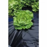 Folie mulcire Black Cover 1.5x100 m